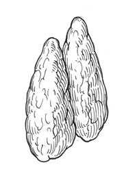 hormonas de crecimiento anabolicas