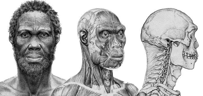Resultado de imagen para homo sapiens u hombre moderno