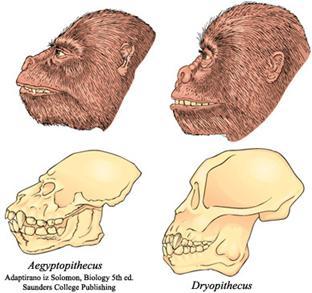 Los Primeros Primates