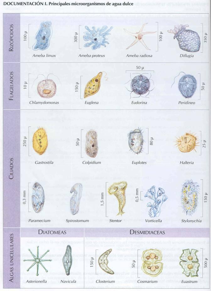 microorganismos patogenos en el agua pdf