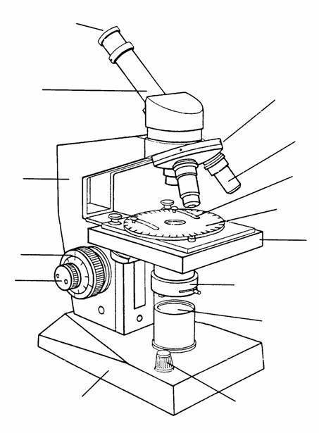 El microscopio óptico