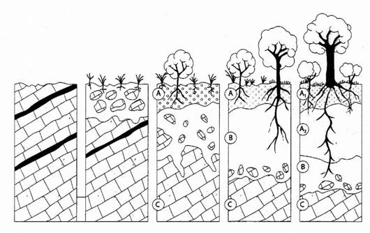 Dibujos de formasion imagui for Suelo organico para dibujar